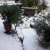 Montpellier se réveille sous la neige aujourd'hui…