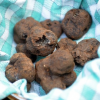 Sexe, truffes et cocottes…