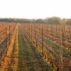 Le vin du mois : mars au domaine La Terrasse d'Elise