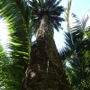 Alger – Découvrez le » Jardin d'Essai «, un joyau dans la ville !