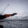 Le Saumon de Norvège une catastrophe pour l'environnement !