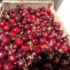 Dans le jardin des Mazotta, profitez de la saison des fraises, cerises et asperges.