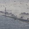 Fukushima, qui peut encore croire que les poissons contaminés resteront sur zone ?