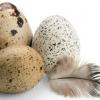 Les oeufs de cailles pour soigner et lutter contre les allergies.