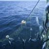 50 ans seraient nécessaires pour reconstituer les stocks de poissons mondiaux… encore faudrait il que la volonté soit forte
