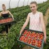 Wimbledon – cette année encore les balles seront jaunes et les fraises rouges écarlates