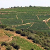 Inquiétude en Roussillon sur les appellations, la Chine en phase  » conquête «