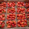 Les fraises de pays arrivent ! … Saviez-vous que c'est bon pour lutter contre le cholestérol?