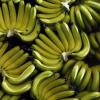La Banane est malade …