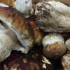 La recette de la semaine : Millefeuille croquant de cèpes et pommes de terre