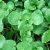 6 légumes verts à feuilles qui vont vous faire du bien … Ré-apprenez à les cuisinier !