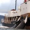 La pêche à la baleine autorisée en Norvège alimente le marché japonais