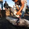 Contrebande d'ailerons de requin en Angleterre pour le meilleur restaurant chinois de Londres