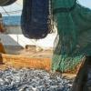 Les Français fâchés avec le poisson ?… le saumon est boudé, le cabillaud poisson préféré des Français…
