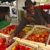 Ces cultivateurs qui remettent la tomate en scène …