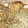 Mais où est donc passée la plus grosse truffe blanche au monde vendue aux enchères à New York semaine dernière ?