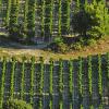 Le vigneron du mois : François Fourel au Domaine du Peyra – IGP Pays D'Oc