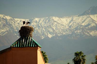 Le charme de Marrakech en hiver, l'Atlas enneigé et la ville sous un grand soleil d'été