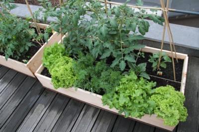 les chefs cultivent leurs jardins m me sur les toits chefs pourcel blog. Black Bedroom Furniture Sets. Home Design Ideas