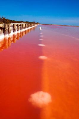 Régulièrement, les étangs de Camargue prennent une couleur rouge provoquée  par le sel. Les clichés pris par le photographe russe Sam Dobson de  paysages ... 42a61d8d4c8