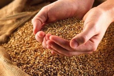 Manger des graines