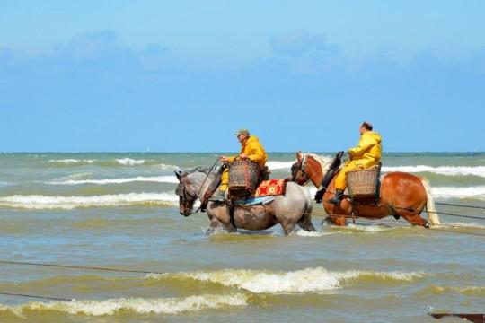 La pêche de crevette à cheval à Coxyde désormais classée Patrimoine immatériel de l'Unesco
