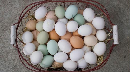 Aux etats unis le mouvement pour l utilisation des ufs de for Oeuf de poule conservation