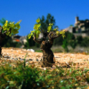 VINCOEURS 2011 : dans l'Hérault on croit à sa viticulture !