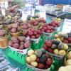 Sur les marchés de Montréal… Le bonheur est sur les étals