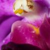 Singapour : des orchidées dans une ville jardin