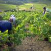 » Terre de Vins » élu Meilleur magazine de vin au monde