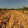 Le vin du mois de mai : le domaine Grès Saint-Paul à Lunel