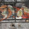 Réclamons plus d'humanité pour les crabes, homards, crevettes… !  Les crustacés craignent la douleur !
