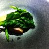 Omnivore – Retour sur 3 jours au coeur du Festival de la Jeune Cuisine inventive et internationale