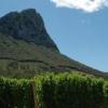 Les vins du Languedoc-Roussillon s'essoufflent t'ils ?