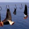 À Hong Kong, le gouvernement exclut les ailerons de requins des dîners officiels