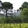 Le vin du mois d'octobre : Domaine Bérénas