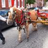 Le retour des marchands ambulants … une belle façon d'humaniser les ville à Baltimore