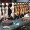 Chine : faire la popote avec du chien n'est plus très en vogue, un Festival de cuisine subit la protestation