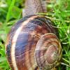 Ramasser des escargots ne fait plus recette en France… Va t'on manquer d'escargots ?