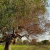 L'huile d'olive sera plus chère pour ce Millésime 2014