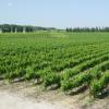 Le vin du mois : le Mas Brès à Saint-Maurice dans le Piémont Cévenol