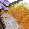 Abeilles en péril … la production de miel chute de 50 % à 80 % en Languedoc-Roussillon