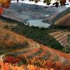 Classement des maisons de vins les plus prestigieuses du monde